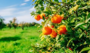 how much can vitamin c really protect you